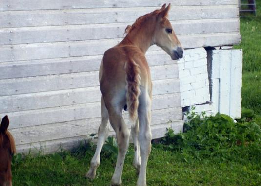 Cute Cat: Cute Horse Colts